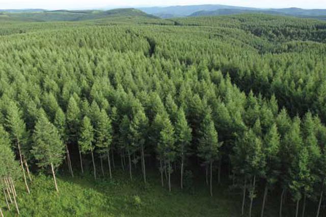 """京冀携手造林80万亩形成""""绿色生态带"""""""