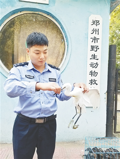 郑州市民发现一只受伤大鸟 竟是国家二级保护动物