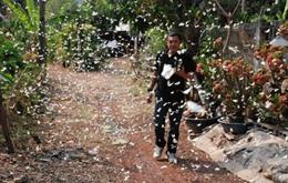 数十万蝴蝶飞泰国村庄避暑