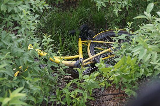 熊孩子把小黄车藏在草丛中