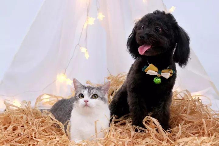 超享受!郑州这家宠物生活馆,满足你吸猫吸狗的所有幻想!