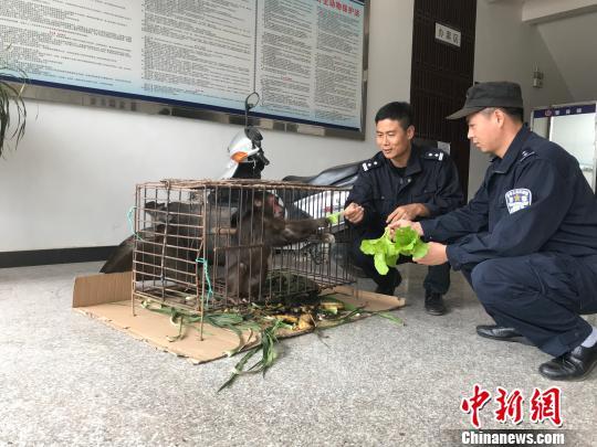 村民饲养二级保护动物短尾猴 半年后交警方放生
