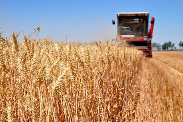 河南夏粮总产量722.74亿斤 播种面积8655.16万亩