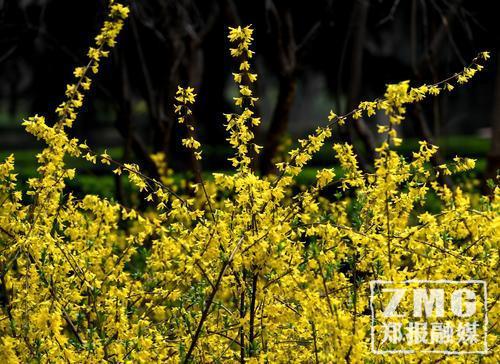 大风也挡不住春天的脚步!郑州各大公园鲜花盛开
