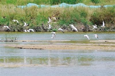 郑州生态环境明显改善 贾鲁河水清岸绿燕鸥飞