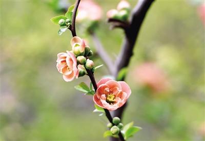 最是一年春好处 郑州各大公园鲜花怒放游客如织
