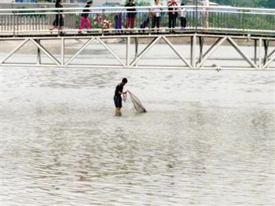 男子全然不顾警示标语 郑州金水河里撒网捕鱼