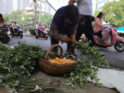 新密69岁大妈来郑州街头卖艾草 收获的却是满满关爱