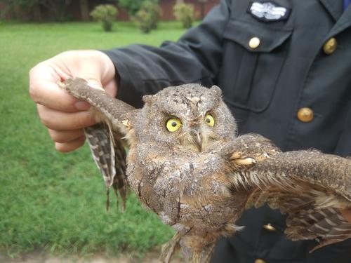 郑州市民从流浪狗嘴里救下一只鸟 竟是国家保护鸟类