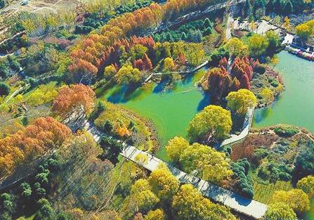 郑州持续增量提质守护美丽家园