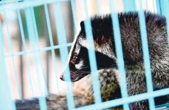 即日起 河南禁止任何形式的野生动物交易活动