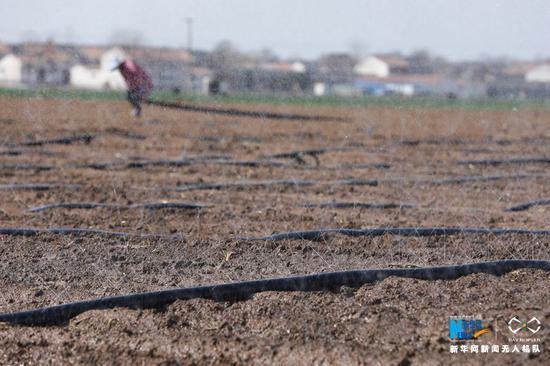 3月11日,河南省温县番田镇北马村农民在田间浇灌。