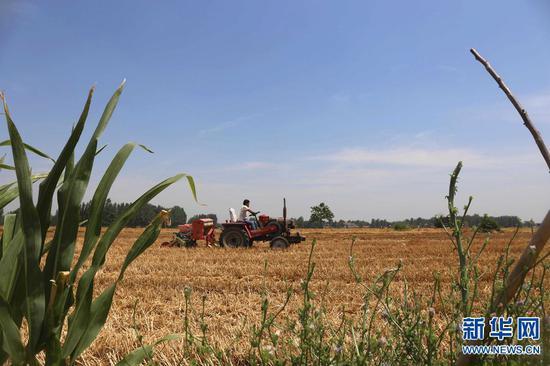 2019年6月11日,河南省民权县野岗镇郑庄村,村民在田间抢种秋作物。