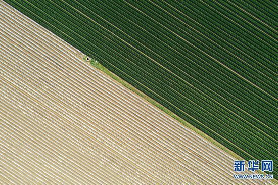 河南宝丰:乡村大田 宛如地毯