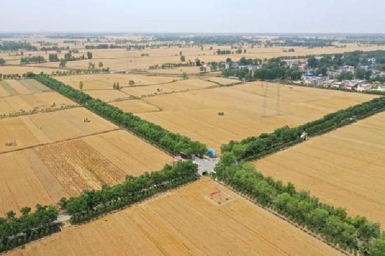 这是5月20日拍摄的河南省南阳市宛城区高庙镇谢营村附近的高标准农田(无人机照片)。新华社记者 冯大鹏 摄