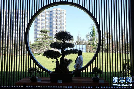 焦作:千余盆景亮相公园(图)
