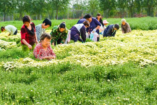 淇县:产业强起来 百姓富起来