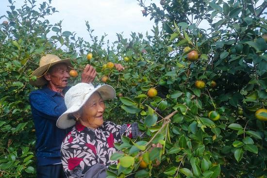 河南光山:种植油茶促民增收(图)