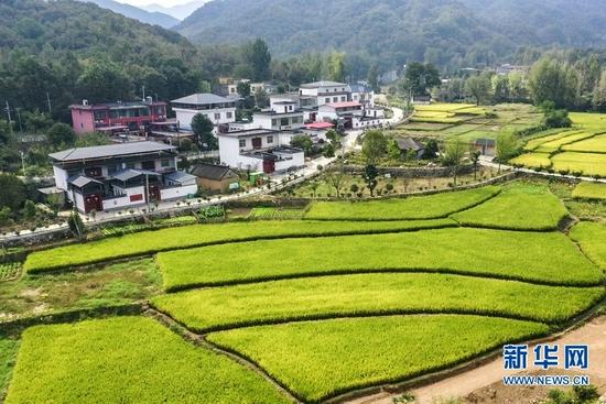 河南鲁山:乡村振兴生态美(图)