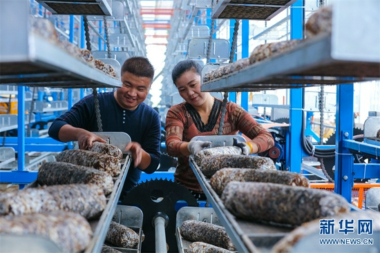 信阳光山:种植香菇助致富(图)