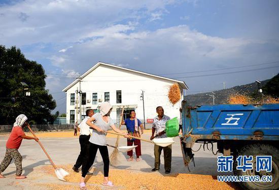 9月7日,在河南省灵宝市豫灵镇杨家村广场,村民在晾晒玉米。 新华社记者 郝源 摄