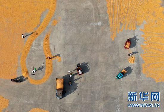 9月7日,在河南省灵宝市豫灵镇杨家村广场,村民在晾晒玉米(无人机照片)。 新华社记者 郝源 摄