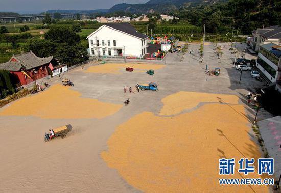 9月7日,在河南省灵宝市豫灵镇杨家村广场,村民在晾晒玉米(无人机照片)。新华社记者 郝源 摄