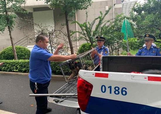 依法、文明、科学!郑州中原区开展整治违规养犬行动