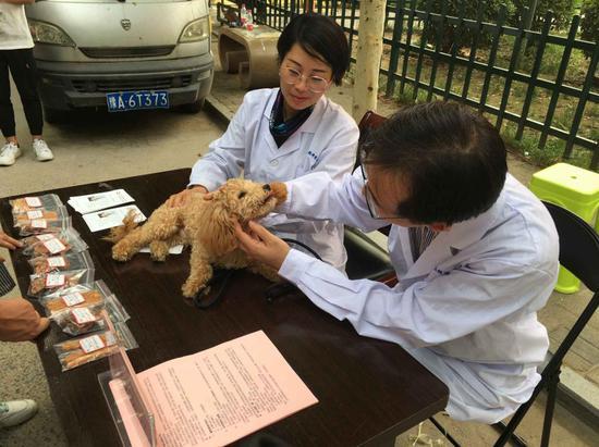 """河南牧业经济学院动物医学院开展""""宠物问诊咨询义务服务""""活动"""