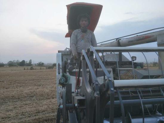 (图为农忙季节张贡献在收割小麦)