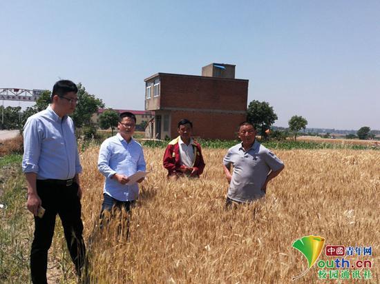 """图为滁州学院自主培育的优良小麦品种""""苏隆128""""培育地。受访者供图"""