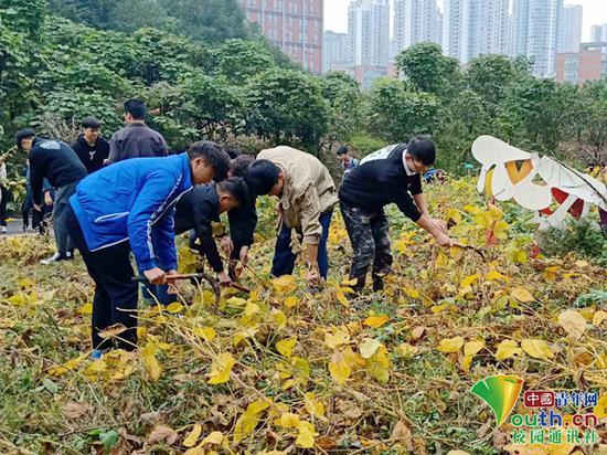 图为同学们在收割农作物。受访者供图