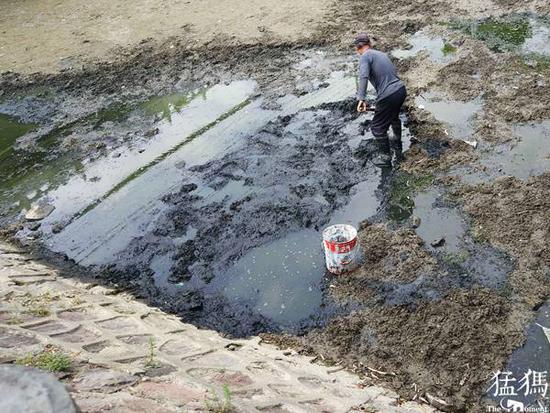 郑州市民金水河里捉泥鳅 10元一斤卖给别人