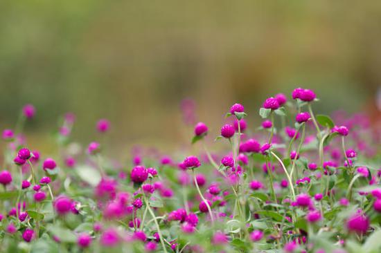 花儿开得格外灿烂。