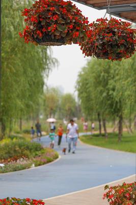 巨大的花卉景观造型,颜色格外美丽。