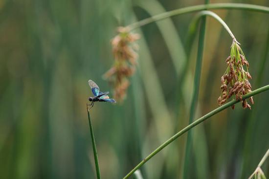 湖面上的一只蜻蜓,别有一番情趣。