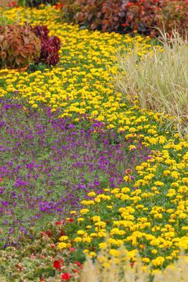 不同颜色的鲜花组合在一起极富层次感。