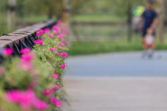 由花卉组合而成的景观桥景色迷人