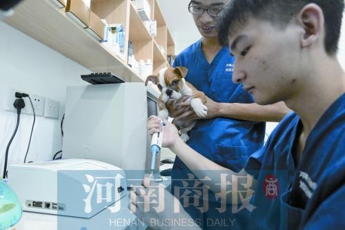 一社区宠物医院,医护人员正在为狗狗检测炎症指数