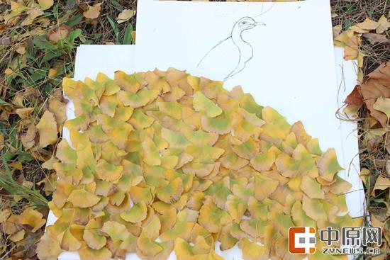 用银杏叶拼成的孔雀开屏。