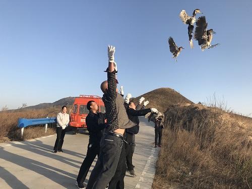 大河报·大河客户端 记者 李岚 文图