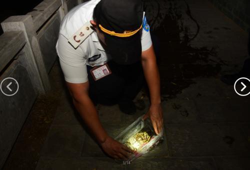 金水河、熊儿河内的鱼虾是鹭鸟的重要食物来源
