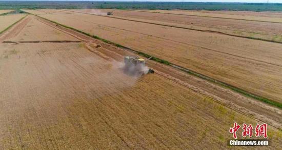 资料图:小麦。齐旭云 摄