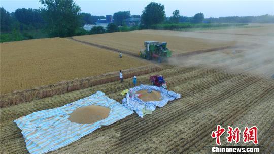 图为淮阳县白楼镇杜庄村丰收的麦田。 齐永 摄