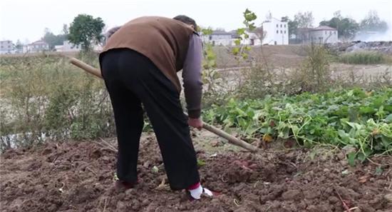 周口68岁老太忍病卖红薯河南新闻 忙活五天不够换孙子一瓶药钱