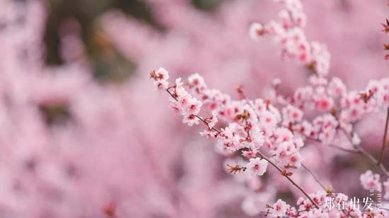 站在山桃树下的花仙子,