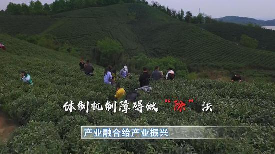 信阳市林茶局副局长 宋世奇