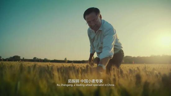 河南省粮食产量从1949年的142.8亿斤