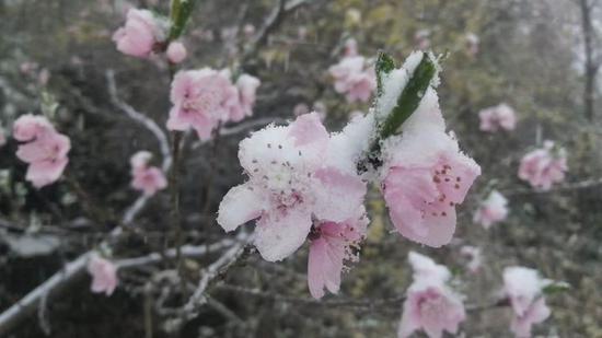 安阳市迎来雨夹雪天气 给生产生活带来影响