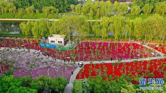 河南许昌:清潩河畔春色美